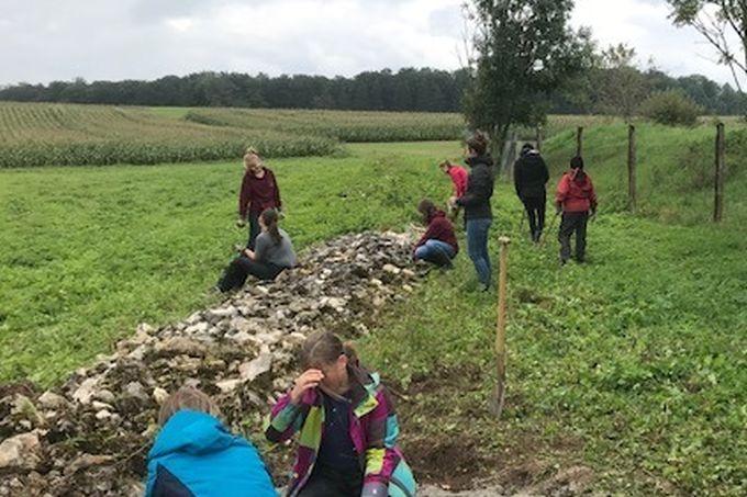 Steinriegelpflege für Zauneidechsen - Foto: Naturschutzzentrum Schopflocher Alb