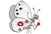 Schmetterlingszeichnung Apollo 19 - Grafik: NAJU / J. Friese