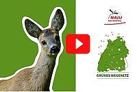 NAJU Film Wildtierkorridoruntersuchung